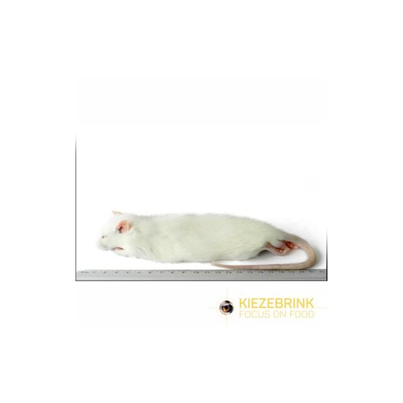 Rats moyens 150-250 g, carton de 10 kg