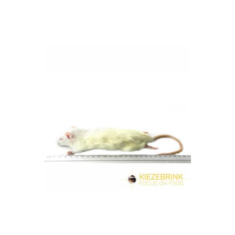 Rat de petite taille 90-150 g, à la pièce