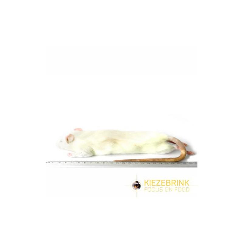 Rat grande taille 250-350 g, à la pièce