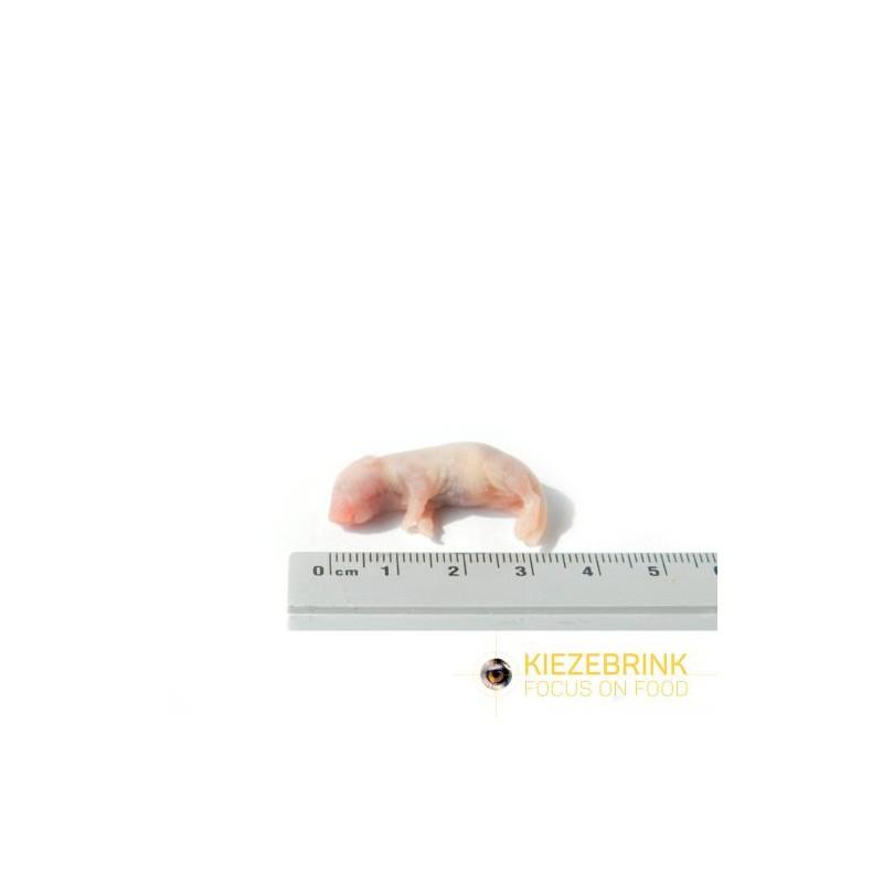 Souriceaux nus sans poils sachet de 25 pièces